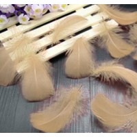 "Goose Coquille Feathers - Cream - 3-5 "" - 20g"