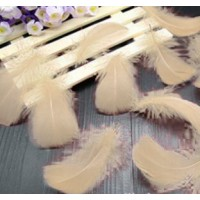 "Goose Coquille Feathers - Ivory - 3-5 "" - 20g"