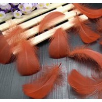 "Goose Coquille Feathers - Rust - 3-5 "" - 20g"