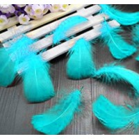 "Goose Coquille Feathers - Turquoise - 3-5 "" - 20g"
