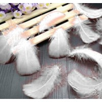 "Goose Coquille Feathers - White - 3-5 "" - 20g"